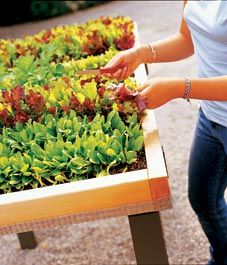Build a portable salad table - Canadian Gardening
