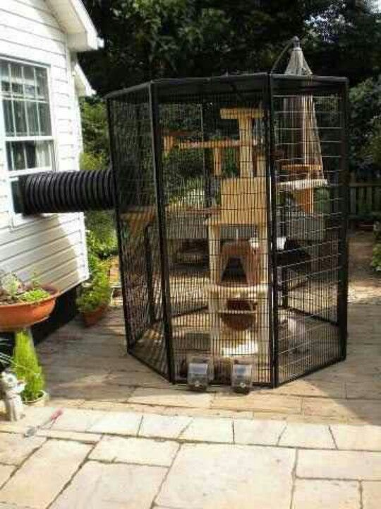 Different take on a 'catio' #catio #CatEnclosure #cats