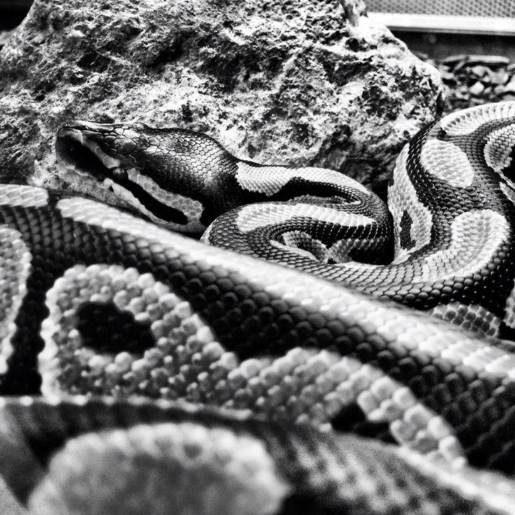 Snake from Zoodom Bratislava