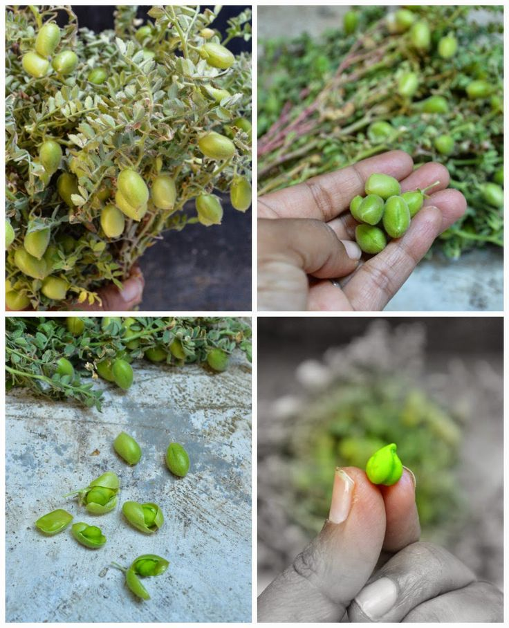 http://www.upala.net/2015/02/green-chickpeas-sundalhasi-kadale-kaalu.html