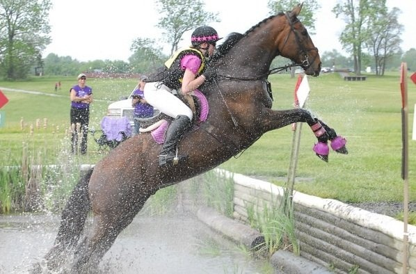 Surf Guitar (15yo OTTB) conquering the bank out of water at Fair Hill on the way to a clean cross country run.: Saddle Pad Stack, Retired Racehorses, Equestrian Jumping, Thinline Equestrians, Cross Country, Thoroughbred, Racehorses Rule