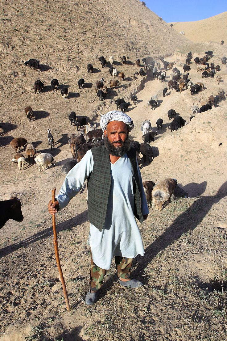 Afghan Shepherd: 185 Best Images About Afghanistan The Country On Pinterest