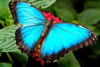 Butterflies ~ Πεταλούδες | Smile Greek