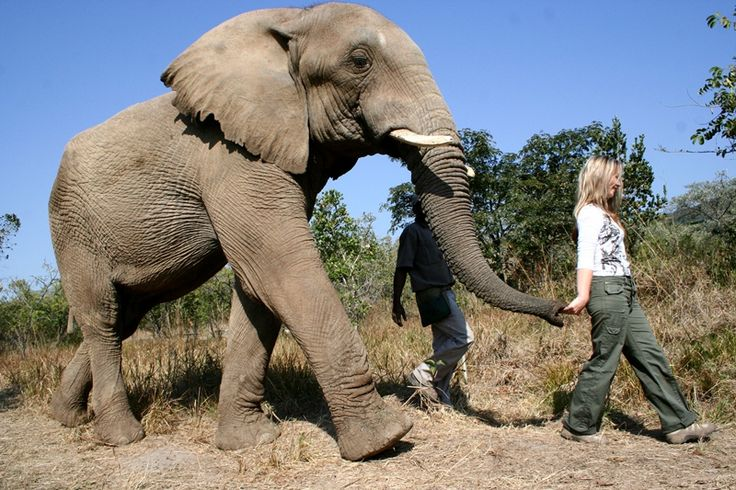 This Package Includes:  •Interaction with Elephants (2hrs) •Touch, Feed & Walk with Elephants •Lunch on Deck Overlooking the Elephant Den •1 Soft Drink per person •Duration: 3-4 hours