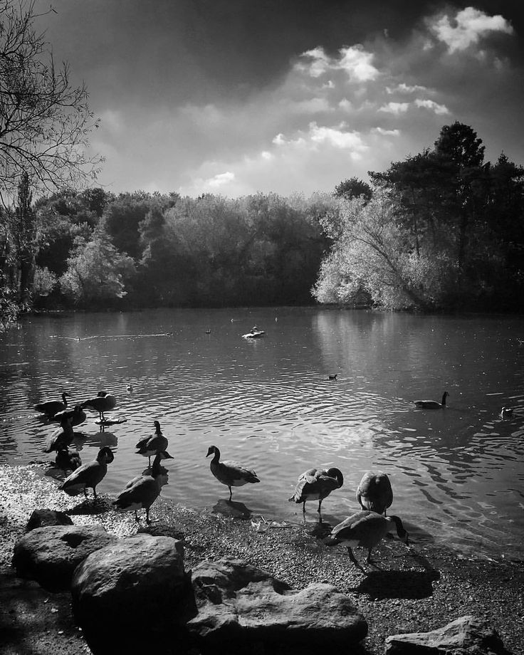 Gaggle. Queen's Park Swindon. By @count_christoph on Instagram.