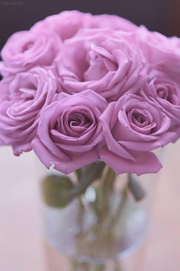 Love lavender roses..I think they smell sweeter than any other..