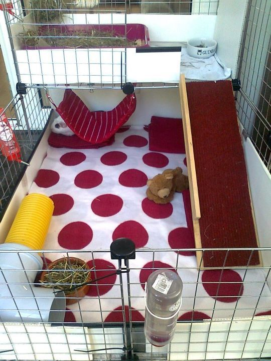 C&C cage- just like my piggies cage different fleece of course...