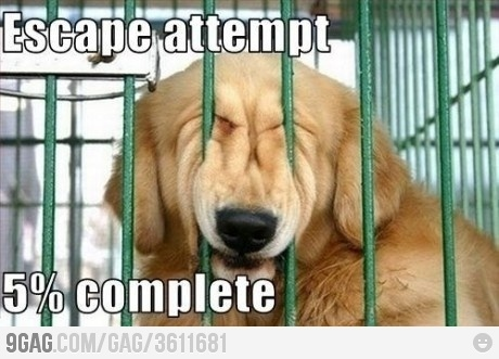 Ha!: Dogs Pics, Funny Dogs, Silly Dogs, Dogs Memes, Pet, Funny Stuff, Funny Animal, Escape Attempt, Furry Friends