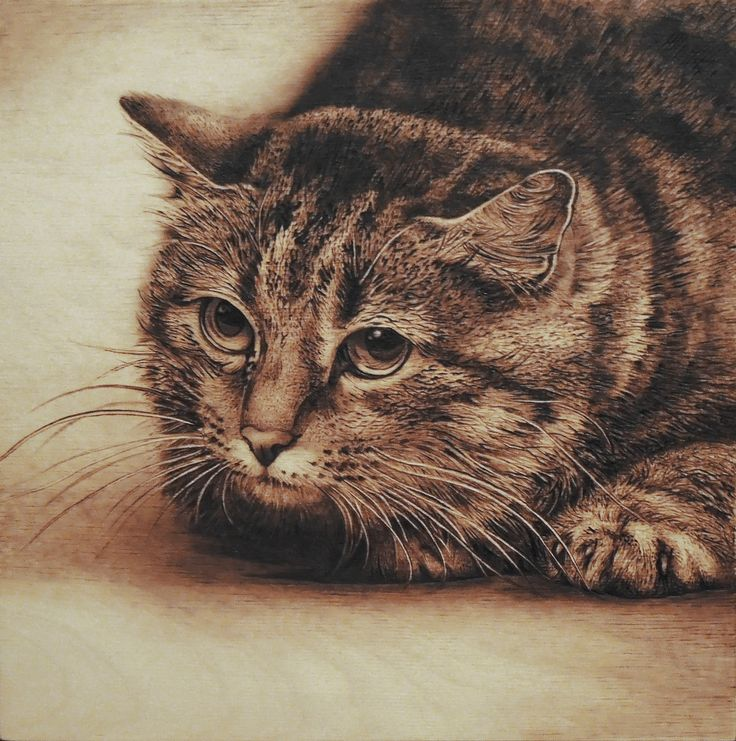 62 Best Animal Art Images On Pinterest Pyrography