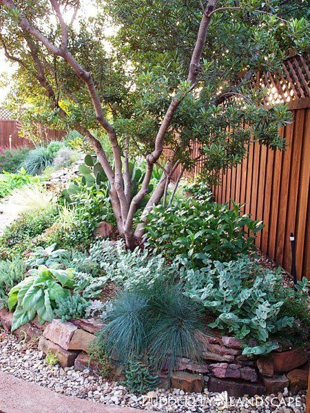 Best 25+ Texas landscaping ideas on Pinterest | Texas plants ...