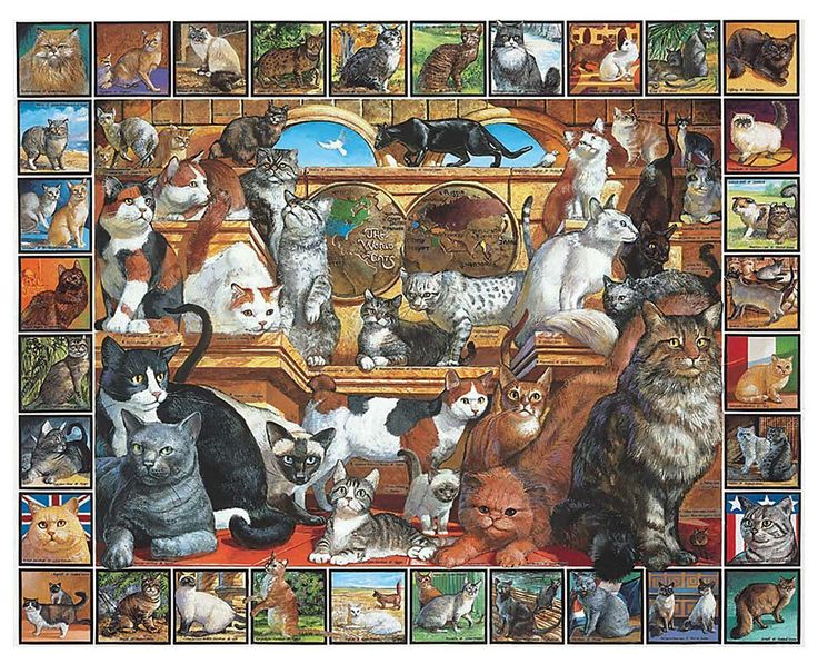 103 best puzzles images on pinterest 1000 piece jigsaw puzzles white mountain puzzles world of cats do it yourself jigsaw puzzle boxed attractively solutioingenieria Image collections