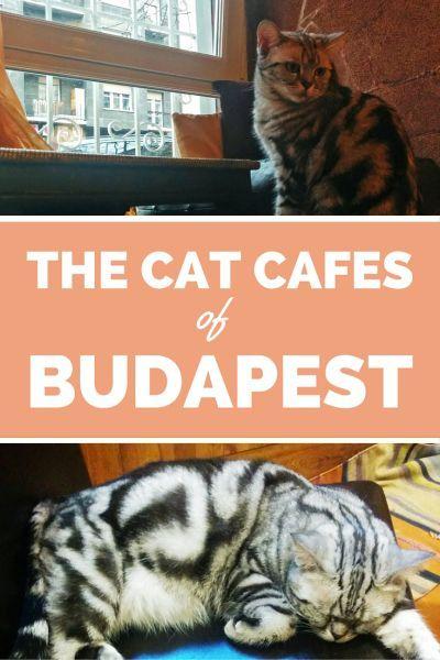 budapest cat cafes
