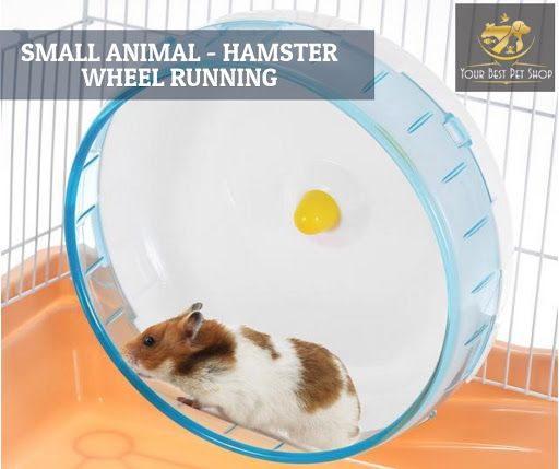 Wheel running sports for small pet such as hamster, rat etc.  Adopt strong steel shaft and premium grade PP material with thick wall and round edge.  No gaping place, your pet won't get its feet hurt or wrenched. Non-slip convex lines increase friction and enhance stability. Silent structure, your animal can run at night without disturbing others. And can be mount on various pet cage.  Buy Now!!  #cutepets #cats #dogs #accessories #petaccessories #yourbestpetshop #petsupplies