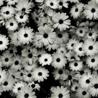 #beautiful #bloom #blooms #blossom #botanical #floral #florals #flower #flowermagic #floweroftheday #flowerporn #flowers #flowerslovers #flowersofinstagram #flowerstagram #flowerstyles_gf #green #insta_pick_blossom #instablooms #love #nature #petal #petals #plants #pretty #rose #sopretty #spring #summer http://gelinshop.com/ipost/1523961261254053192/?code=BUmMrFcgQ1I