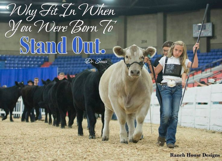 746 best Show Cattle images on Pinterest | Thoughts ...