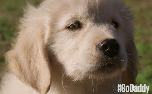 This Super Bowl Commercial Was Pulled, You Have To See Why [Video] #SuperBowl #GoDaddy