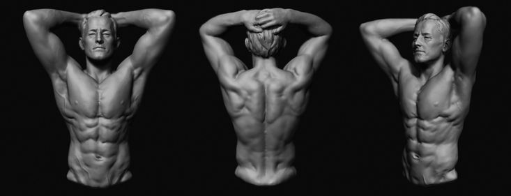 Male torso exercise, Pengfei Sun on ArtStation at https://www.artstation.com/artwork/male-torso-exercise