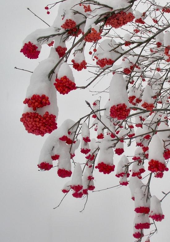 snow capped~~