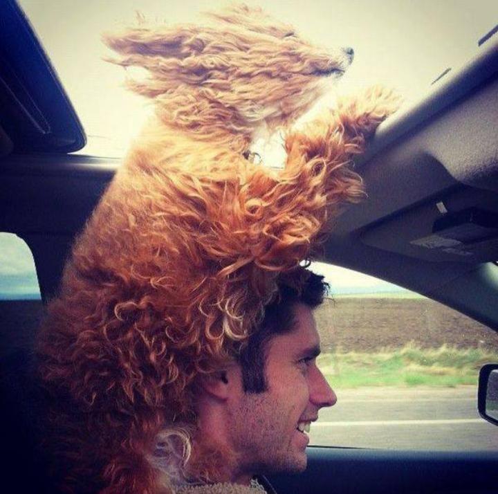 Happy sunroof puppy via Imgur