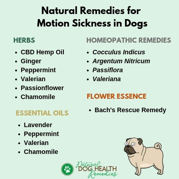Use These Natural Remedies To Help A Dog With Motion Sickness Dogcare Doghealth Sick Dog Remedies Motion Sickness Remedies Car Sickness Remedies