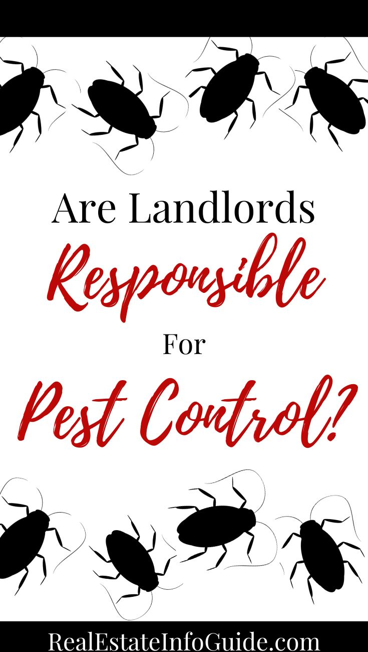 Are Landlords Responsible For Pest Control Real Estate Info Guide Being A Landlord Pest Control Real Estate Advice