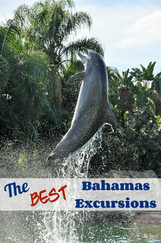 Cruising to the Bahamas? You might as well embrace the destination by partaking in a fun activity! Here's some of the best Carnival Bahamas excursions. #CruisingCarnival