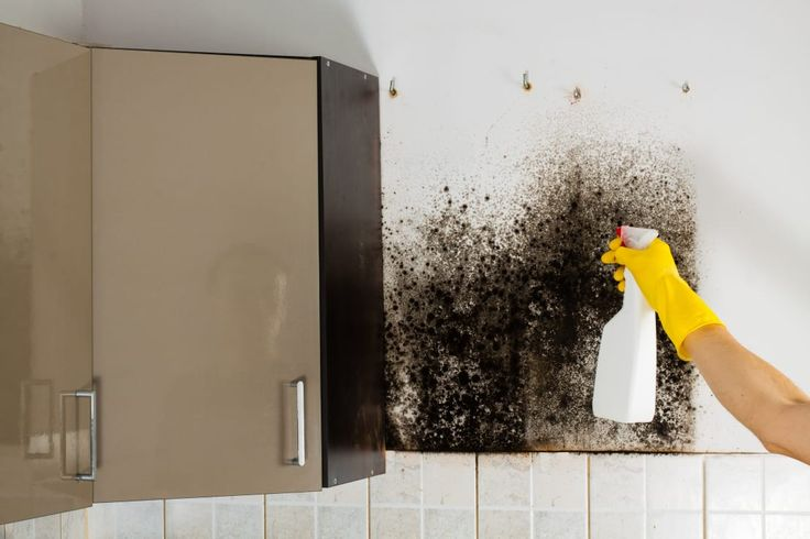 L'umidità in casa è un problema che molti dobbiamo affrontar…