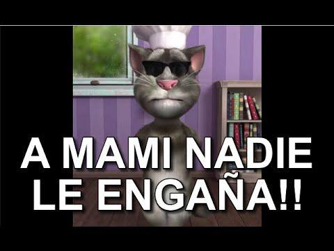 7 best el gato tom images on Pinterest