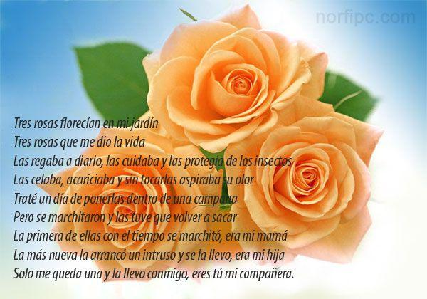 De La Vida Tristes: Las Tres Rosas Que Me Dio La Vida