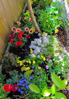 Planting Color In Shady Garden Beds