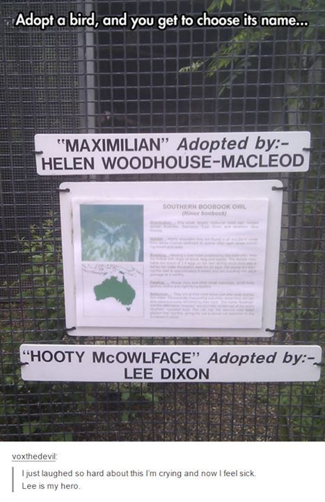 Who the hell would name a bird 'maximilian'?
