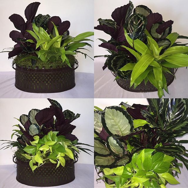 Custom arrangement with potted living plants .  Container from Barton's. @bartonsnursery  Perfect centerpiece. #arrangementsbyamanda