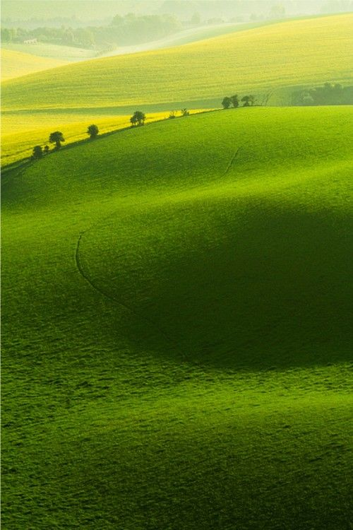 pastoral rolling green fields