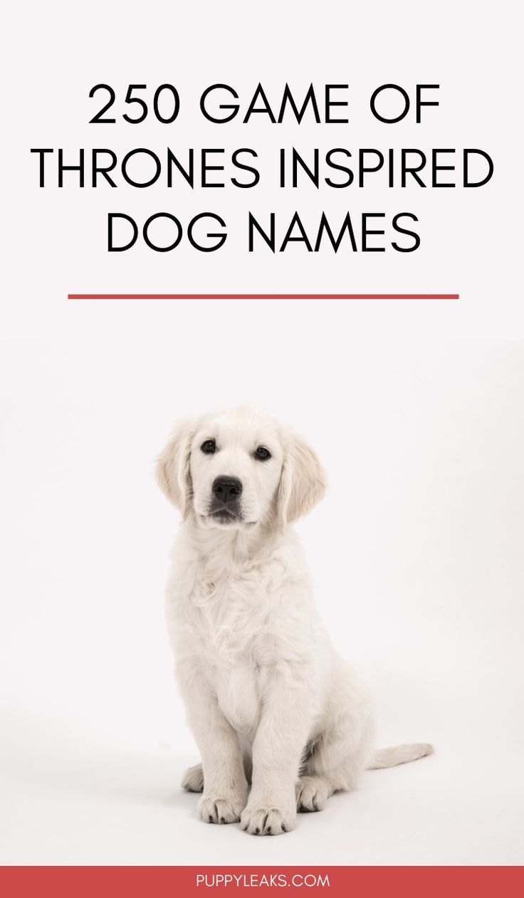 250 Game Of Thrones Inspired Dog Names Blogger Love Pins Dog