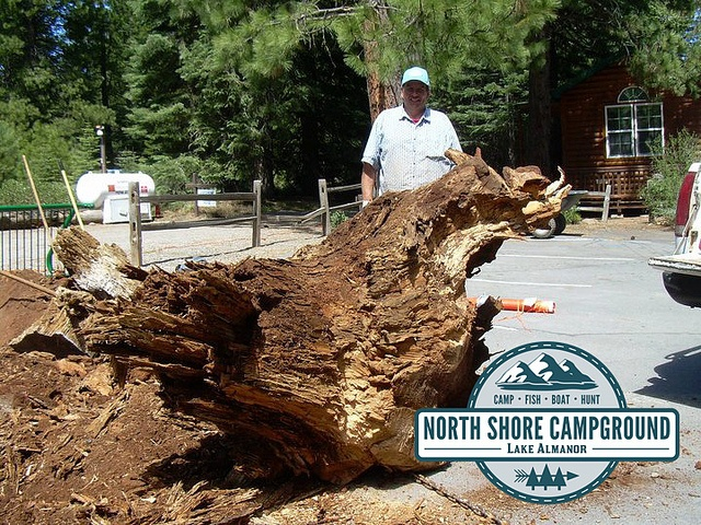 Come visit the North Shore Campground and #RVPark located in #NorthernCalifornia in Plumas county in a town called Lake Almanor - just minutes away from Chester. We have a large variety of #RVsites, #Cabinrentals and #Tentsites just waiting for you to come rent. Go #camping and explore the great #outdoors of the #NorthState with one of our lake view spots. Look at this huge #tree come down. Visit northshorecampground.com or email info@northshorecampground.com to find out rental…