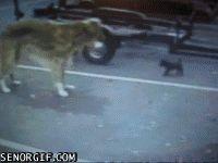 Dog Training Equipment Gif #4291 - Funny Dog Gifs| Funny Gifs| Dog Gifs