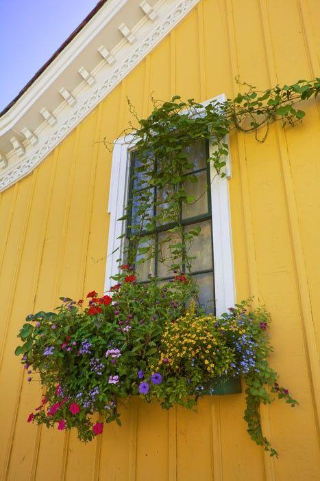 Mystic Seaport window box - Museums - Gardening - Flowers
