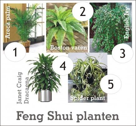 De kracht van planten in je huis | Inrichting-huis.com