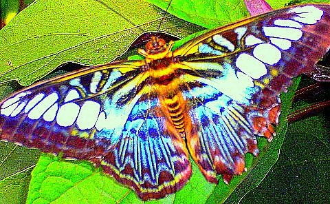 butterfly by mstarmi, via Flickr I can't decide if this is beautiful of the stuff of nightmares!