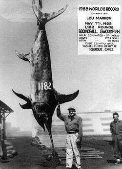 "Swordfish, XIPHIAS gladius (Linnaeus, 1758), aka broadbills, are named for their long ""bill""."