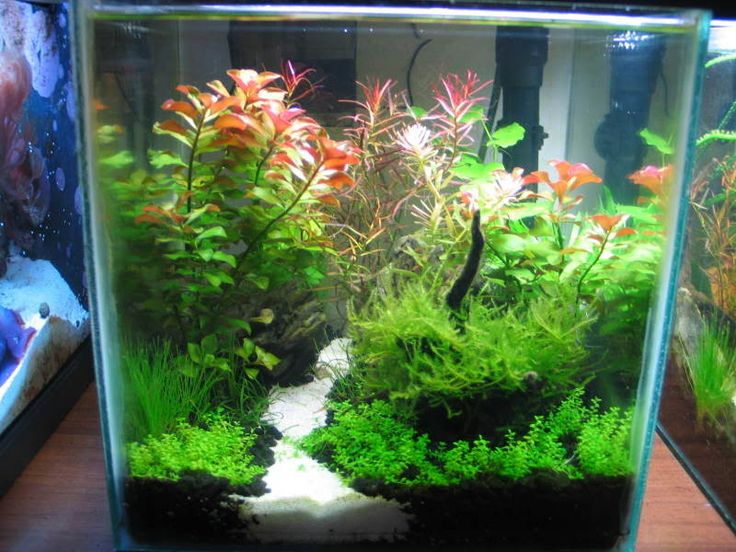 Low Tech Tank Show-and-Tell (low tech can be lush, too! =) - Page 10