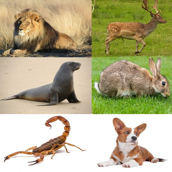 25 Different Types Of Animals That Can Amaze You Different Types Of Animals Animals Types Of Animals