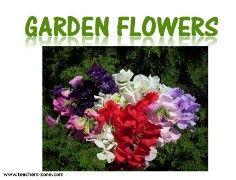 garden flowers flashcards