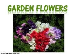 garden flowers flashcards