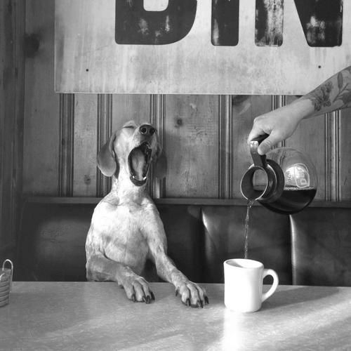 Great photo in every respect... Dog  in need of morning cup of coffee....  Definitely!