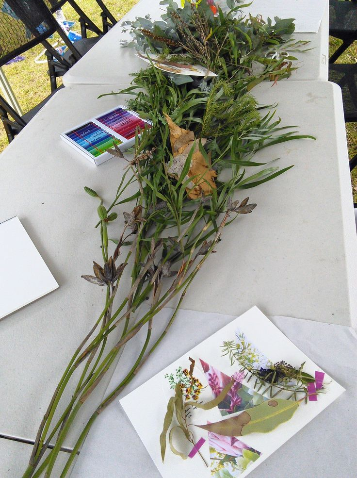 Prepping and styling for children's botanic collage workshop on Australia Day (Jan 26th) 2017 at Hornsby Park, Hornsby. My workshop was part of the Hornsby Shire  Council's, Australia Day event. Creative Process Workshop.