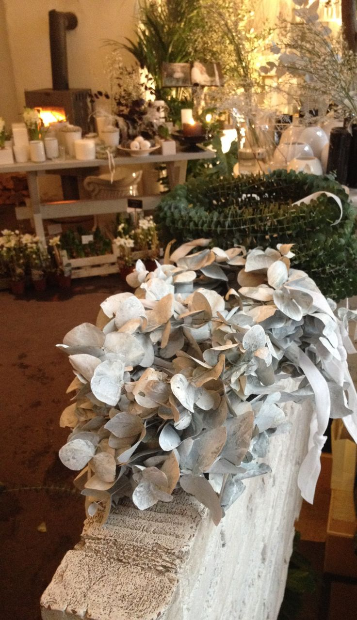 Hvite og grønne Euca Luptus