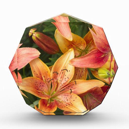 Garden Lilies Awards