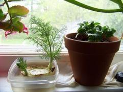 FREEPATENTS: ΕΠΙΒΙΩΣΗ: Καλλιεργήστε ξανά και ξανά αυτά τα 14 λαχανικά και φρούτα για εξοικονόμηση χρημάτων [Δείτε λίστα] !!!