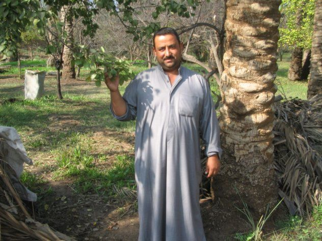 Maitham - pěstitel palem